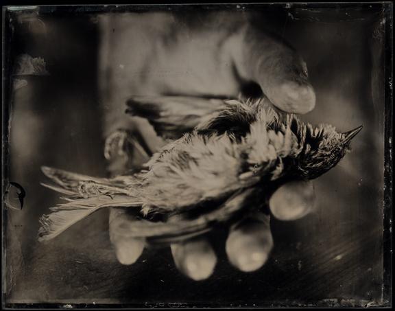 Deadbird7