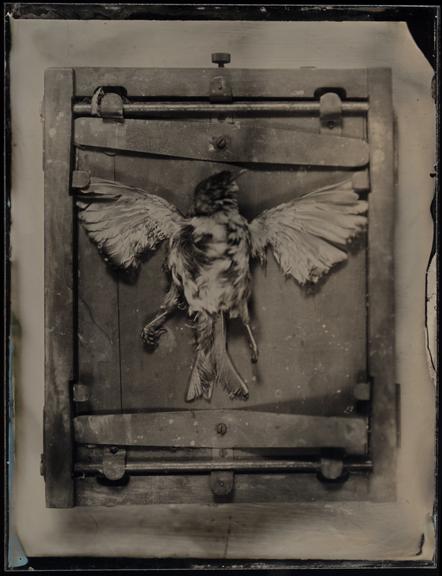 Deadbird8