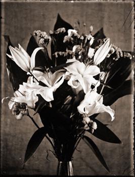 FlowerNeg