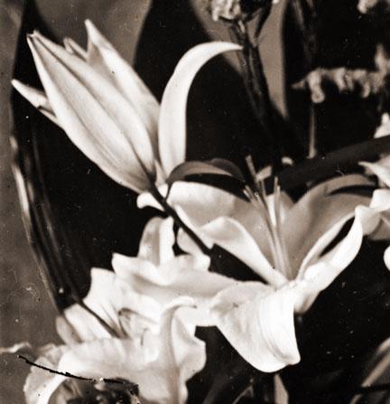 FlowerNegCrop