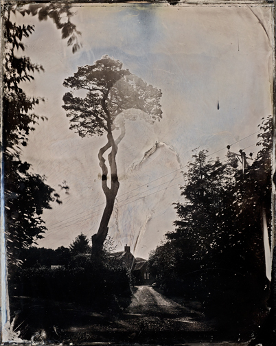 Tree_ambrotype2